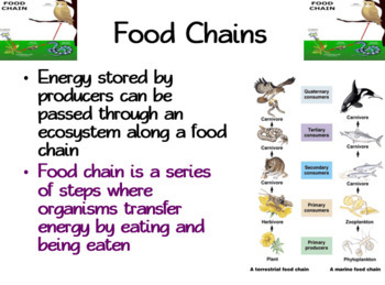 Food Chains & Food Webs: PowerPoint, Student Guided Notes, Worksheet