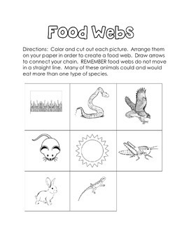 Food Chains & Webs Printable Interactive Activity