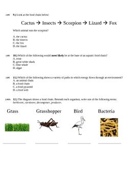 Food Chains & Food Webs Quiz