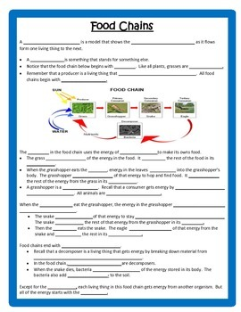 Food Chains & Food Webs UNIT  4th Grade Science