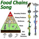 Food Chains! (Mr. W's Trophic Levels Music Video)