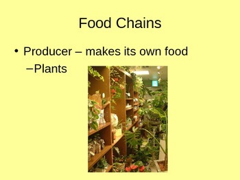 Food Chains PowerPoint