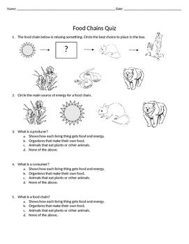 Food Chains Quiz