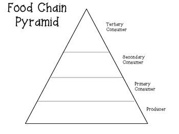 Food Chains Sort
