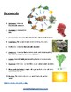 Food Chains - K - 8 - Students with Medical Disabilities - ESSA - Science