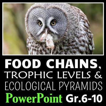 Food Chains - PowerPoint {Editable}