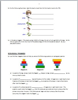 food chains webs and ecological pyramids worksheet answers. Black Bedroom Furniture Sets. Home Design Ideas