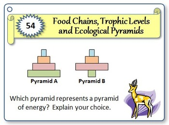 Food Chains - Task Cards {With Editable Template}