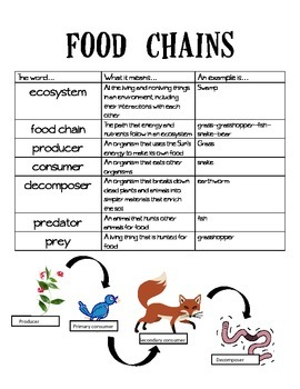 Food Chains Vocabulary