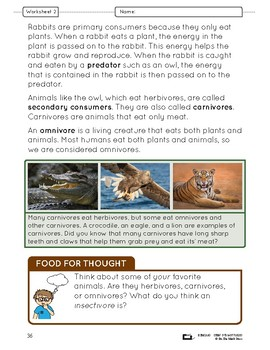 Food Chains & Webs Lesson Plan Grade 4