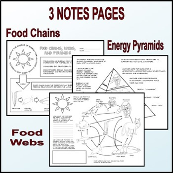 Food Chains, Webs, and Pyramids Guided Graphic Notes