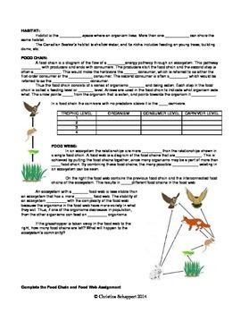 Food Chains & Webs in Ecology - Lesson & Worksheets