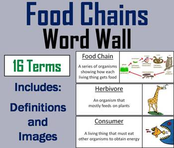 Food Chains Word Wall Cards