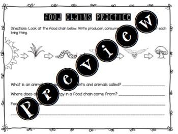 Food Chains Worksheet
