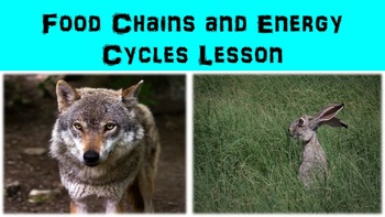 Food Chains and Energy Cycles Lesson