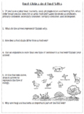 Food Chains and Food Web Worksheet