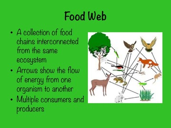food cycle internet business strategy ppt