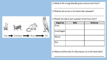 Food Chains and Food Webs Review