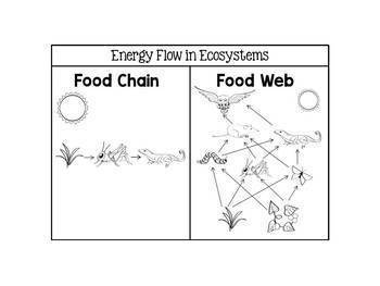 Food Chains, Food Webs, and Energy Pyramids Interactive Notebook Activities