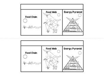 food chains food webs and energy pyramids interactive notebook