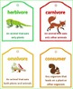 Food Chains and Food Webs illustrated definition cards