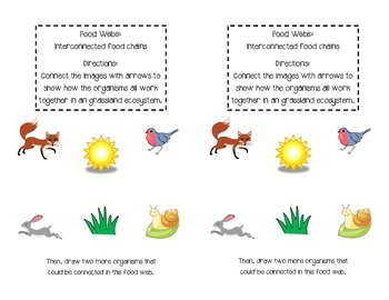 Food Chains and Food Webs Interactive Notebook Pages