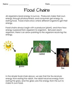 Food Chains and Food Webs - NO PREP Notes and Activities for Grades 3-5