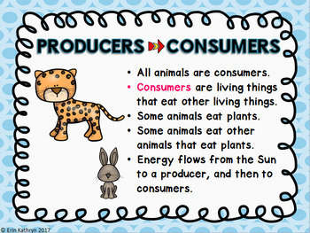 Food Chains and Food Webs PowerPoint and Notes Set