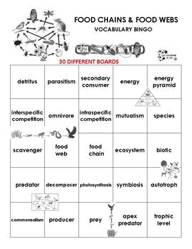 Food Chains and Food Webs Vocabulary Bingo