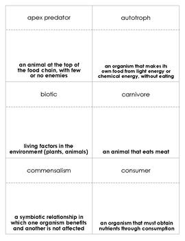 Food Chains and Food Webs Vocabulary Bingo