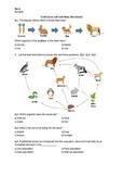 Food Chains and Food Webs - Worksheet