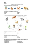 Food Chains and Food Webs - Worksheet | Distance Learning
