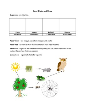 Food Chains and Webs Notes