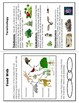 Food Chains and Webs: Producers, Consumers, Decomposers