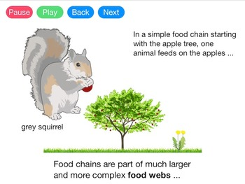 Food Chains and Food Webs (Video)