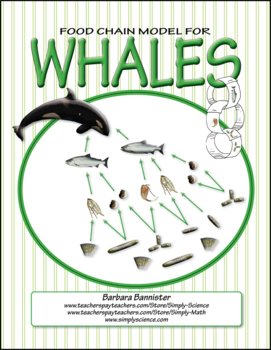 Food Chains for Whales