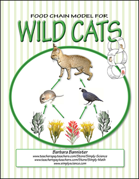 Food Chains for Wild Cats