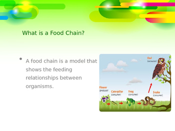 Food Chains vs. Food Webs Powerpoint