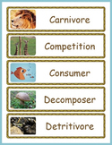 Food Chains Word Wall