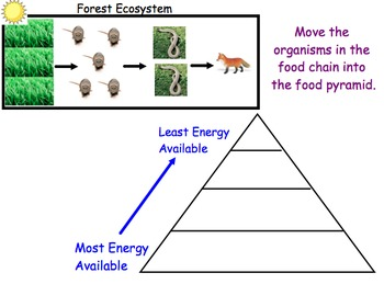 Food Energy Pyramids - Lesson Presentation, Interactive Slides, Video Links