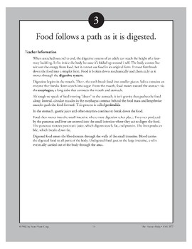 Food Follows a Path As It Is Digested