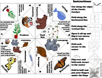 Food Web Activity Foldable: Producers and Consumers, Decomposers Etc.