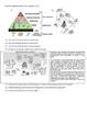 Food Web Analysis