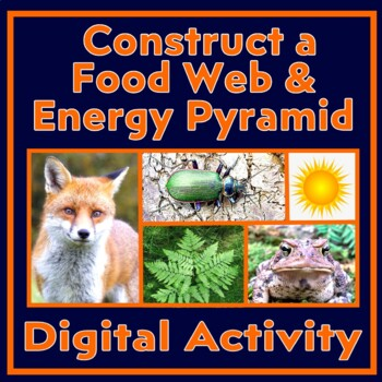 Food Web Cards - Construct a Forest Ecosystem Food Web & Food Pyramid