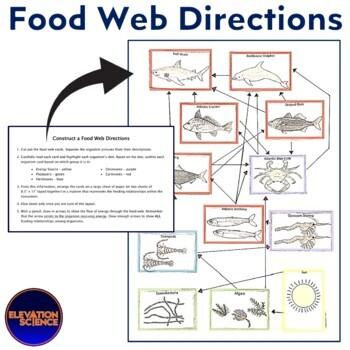 Food Web Cards - Construct an Atlantic Ocean Food Web & Food Pyramid (New)