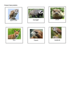 Food Web Cards: Great for building food webs or games!