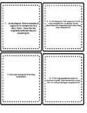Food Web Discussion Cards