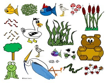 Food Web - Ecology