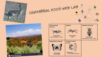 Food Web, Energy Flow, Energy Pyramid Chaparral Food Web Lab Project
