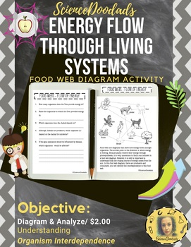 Energy Flow Through Living Systems - Food Web Diagram Activity